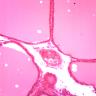 Omano OMSK-HH50 Histololgy Human Tissue Prepared Slides