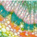 Gryphax Arktur 8.0MP CMOS Color Digital Microscope Camera