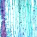 Pine Leaf - Omano OMSK-15NA Non Animal Slides