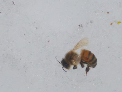 House Bee Sampling