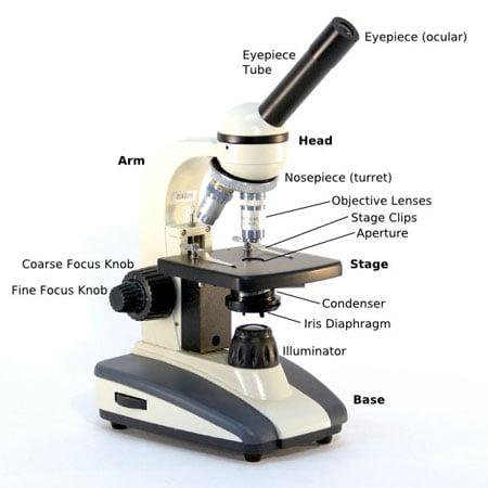 Microscope                     parts diagram